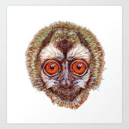 Peruvian Andean Night New World Monkey Face Canvas Art Print