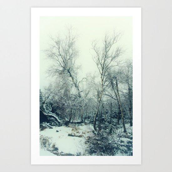 snow birch Art Print