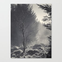 Mist rising at Wilsey Woods Canvas Print