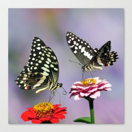Swallow tail  or Christmas Butterfly Canvas Print