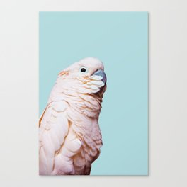 Parrot Photography   Pink Bird    Tropical   Exotic   Turquoise Art   Blush Pink Canvas Print