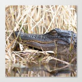 Watercolor Alligator 04, Okefenokee Swamp, Geogia, The Sunbather Canvas Print
