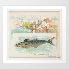 Vintage Spanish Mackerel Fish Illustration (1889) Art Print