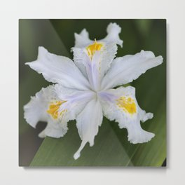 Japanese Roof Iris 2 Metal Print