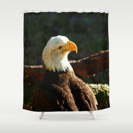 Bald Eagle Portrait Shower Curtain