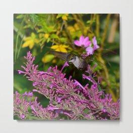 Hovering hummingbird feeding from agastache 58 Metal Print