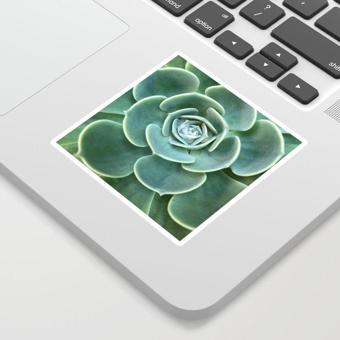 Diamond Succulent Sticker