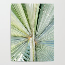 Fanned Palms Poster