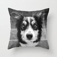 border collie Throw Pillows featuring Tri-coloured border collie. by liamgrantfoto