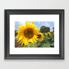 sunflower photography Framed Art Print