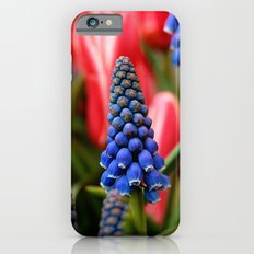 Grape Hyacinth and Tulips iPhone 6s Slim Case