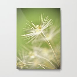 Dandelion Water Drop Macro 8 Metal Print