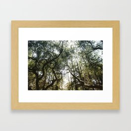 Among the Trees Framed Art Print
