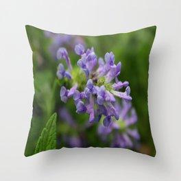 Catmint Blue Moon Throw Pillow