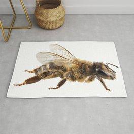 Bee species apis mellifera common name Western honey bee or European honey bee Rug