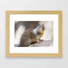 Squirrel @ Yosemite Framed Art Print