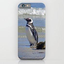 Magellanic Penguin by the Sea iPhone Case