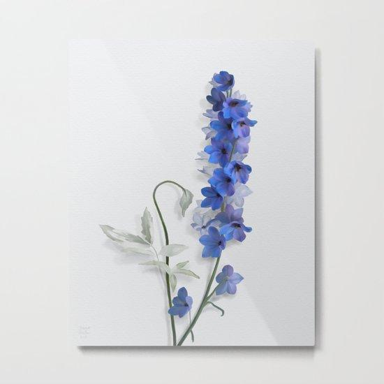 Consolida, watercolors Metal Print