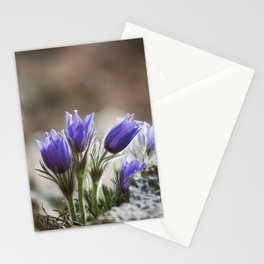 Cluster of Pasque Flowers Stationery Cards