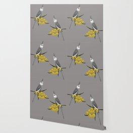 White Faced Cockatiel Wallpaper