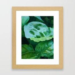 Green Basil Framed Art Print
