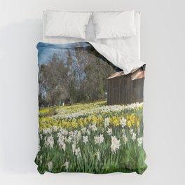 Daffodils and Barn Comforters