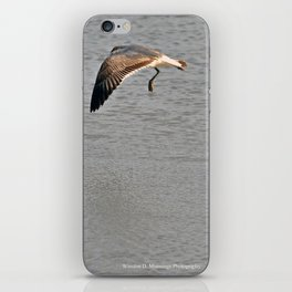 The Birds of Cutler Bay Wetlands (Amazing Grace!) iPhone Skin