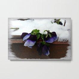 Pansy under snow Metal Print