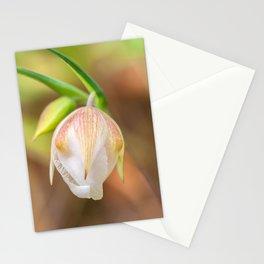 Globe Lily Stationery Cards