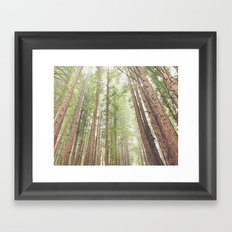 Giant Redwoods Framed Art Print