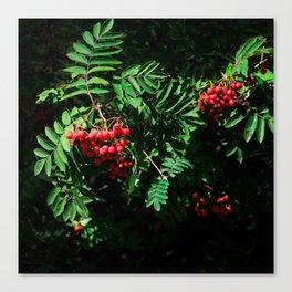 Rowan-berry Canvas Print