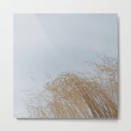 Golden weeds in summer Metal Print