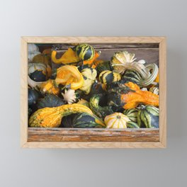 Freshly picked assortment of gourds and squash, Autumn Decorations Framed Mini Art Print