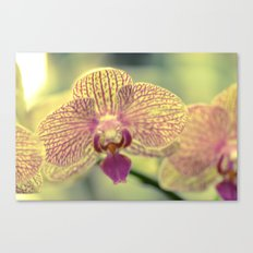 Orchid Ⅲ Canvas Print