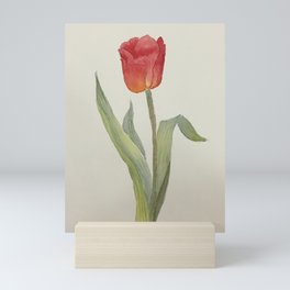 Red Tulip - watercolor painting by Sirena Sana Mini Art Print