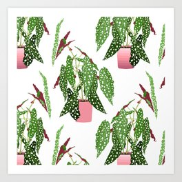 Simple Potted Polka Dot Begonia Plants in White Art Print
