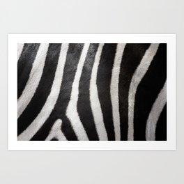 Zebra strips Art Print