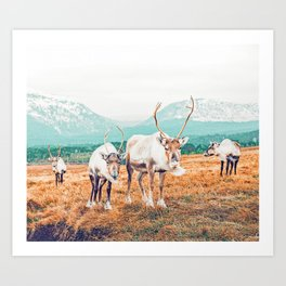 Curious Winter #photography #travel Art Print