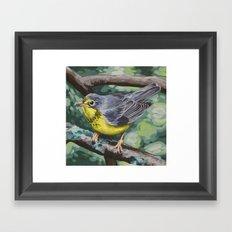 Canada Warbler Framed Art Print