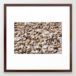 shells for days  Framed Art Print