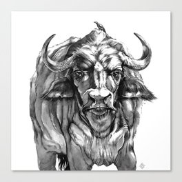 African Water Buffalo Canvas Print