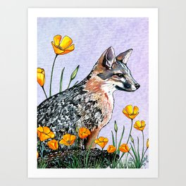 Channel Island Fox (Blue Sky) Art Print