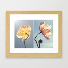 Iceland Poppies Framed Art Print