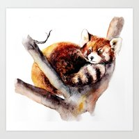 red panda Art Prints featuring Red Panda by Anna Shell
