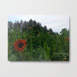 Sunflower and corn Metal Print