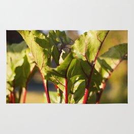 Beet Leaves Rug