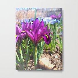 Dwarf Iris in Spring Metal Print