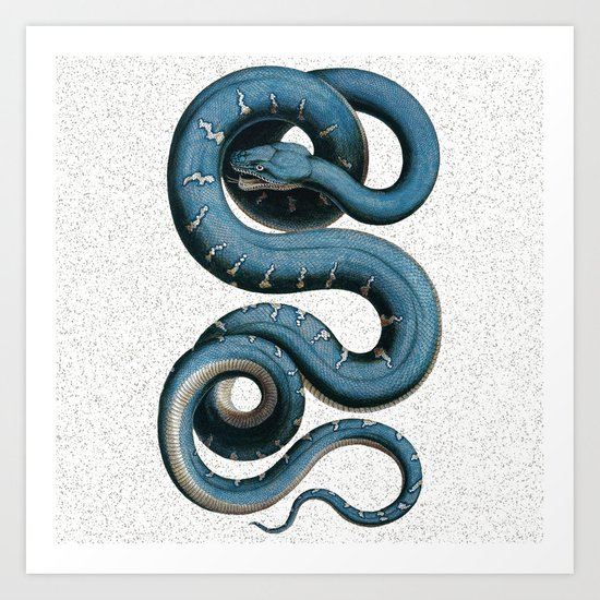 Blue White Vintage Snake Illustration Animal Art Art Print