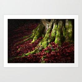 Tree roots, Autumn Leaves Art Print
