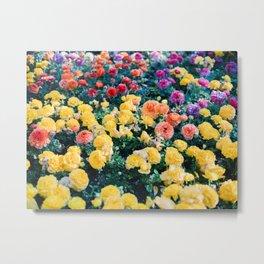 Ranunculus in Granada | Colorful floral fine art photographer | Botanical photo art Metal Print